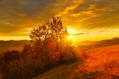 Autumn Forest In Sunrise Countryside. Rising Sun Above Autumn Countryside poster