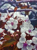 The Beginning Of Spring, New Blossoms Budding On An Early Spring Day, Spring Blossoms.oil Painting S poster