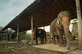KO CHANG, Tailândia - 22 de dezembro: Elefantes em um centro de treinamento em 22 de dezembro de 2011, em Ko Chang, T
