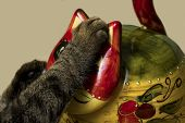 The Cat Lies On His Back Next To A Toy Cat. The Image Shows A Cats Paw And A Large Fragment Of A To poster