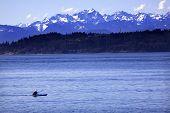 Kayak Puget Sound, Olympic Mountains Edmonds, Washington
