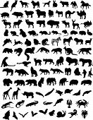 stock photo of shrew  - 100 black silhouettes of different animals - JPG