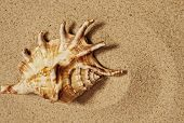 Seashell on a sand.