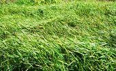 Rustle Of A Grass.