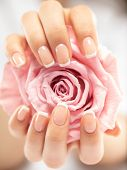 Beautiful womans nails with french manicure and rose. Beautiful female hands. Hand care. Woman care poster