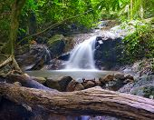 Creek in tropical forest. Beautiful landscape with trees, mossy stones and green plants. Adventure b