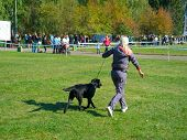 SUMY, UKRAINE - OCTOBER 7: Unidentified participant competes in regional dog show on October 7, 2012