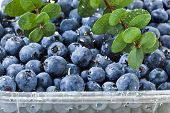 blueberries  in plastic container box