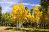 Fall Color In Arizona