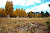 Fall Color Arizona