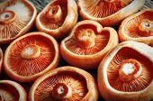 mushrooms on wood table closeup