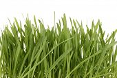 Green grass in basket isolated on white