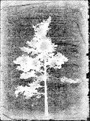 pine silhouette on old paper