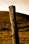 Sepia Barbed Wire