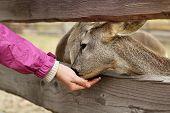 Feeding Deers At A Farm
