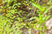 Frog Pond - swamp