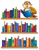 stock photo of storybook  - Illustration of an owl above the wooden bookshelves with books on a white background - JPG
