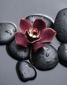 Single red orchid with zen stones on black background