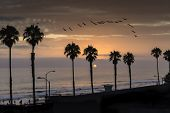 Pelicans at sunset in Oceanside, California. Oceanside is 40 miles North of San Diego, California, USA.