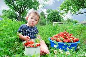 The Garden Beds Near The Little Girl Is Sitting, And Near It Is A Full Circle Of Strawberries