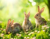 Rabbits. Beauty Art Design of Cute Little Easter Bunny in the Meadow. Spring Flowers and Green Grass. Bunnies. Sunbeams