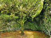 Saint Tree On Hierro
