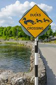 Ducks crossing  sign, Cong, Ireland,