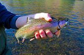 ������, ������: Rainbow Trout Catch Release