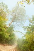 Misty morning in jungle near Umphang. Tak Province in northwestern Thailand.