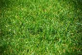 Example of lens vignetting effect - grass background