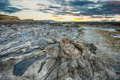 Ancient petrified forest on the coast at Curio Bay, Otago - New Zealand