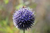 a bee sucking nectar