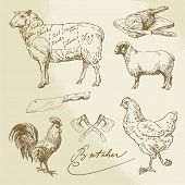 Domestic Animal Meat Diagrams - hand drawn collection