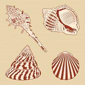 Vintage Shells Set. Vector EPS10 illustration.