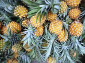 fresh honey pineapples