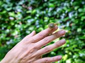 Snail Crawling On Female Hand