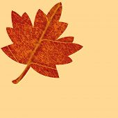 Bright leaf on beige background