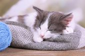 Cute little kitten sleeping on plaid, on bright background