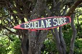 picture of escuela  - Escuela de surf  - JPG