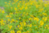 Abstract Background Bokeh From Flower
