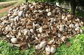 A heap of outer covers of coconuts