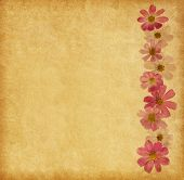 Beige paper  background with pink flowers. Cosmea