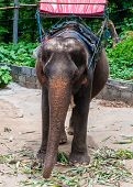 Elephant Waiting To Start The Tours With Tourists In Kanchanaburi, Thailand.