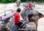 Mahouts and their elephants waiting to start the tours with tourists