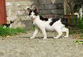 Yard kitten