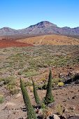 deserted landscape of teide national park on tenerife, canary islands, spain