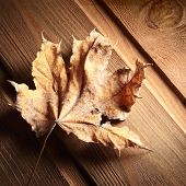 dry autumn leaf on a wooden floor
