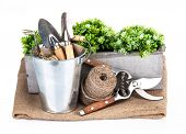 Garden tools in bucket with green plant. Isolated on white background