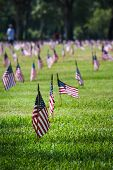 Us Flags In A Veterans Cemetery On Veterans Day