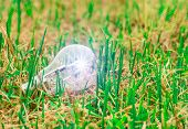 Light Bulb Idea On The Grass